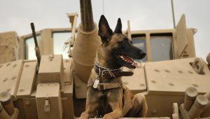 Άνθρωπος και σκύλος: Μαζί και στον πόλεμο, από την προϊστορία ως σήμερα