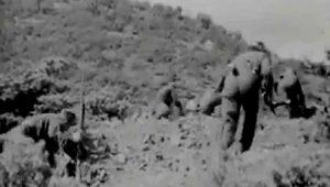 Ποντοκερασία 1946: Η επαίσχυντη ενέδρα και η καταστροφή ενός λόχου